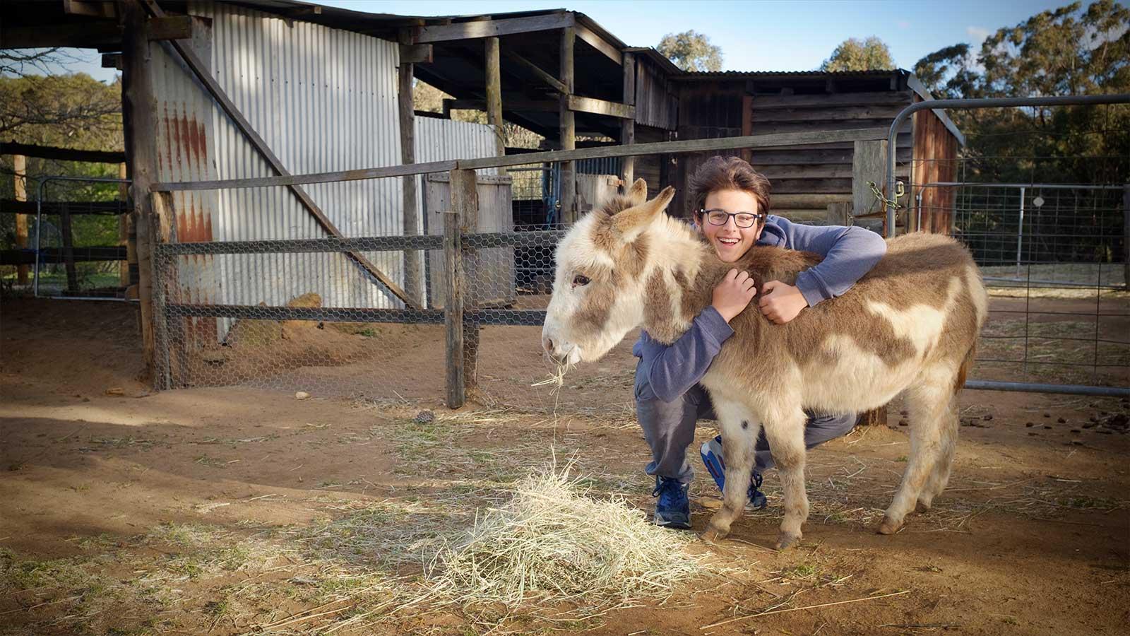 rocking donkey stud farm stay at rocking donkey stud exeter nsw. Black Bedroom Furniture Sets. Home Design Ideas